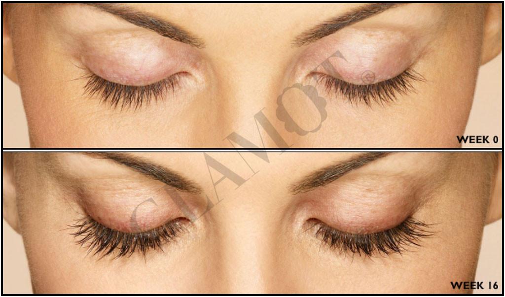 Beautylash Eyelash Growth Booster Glamot Com