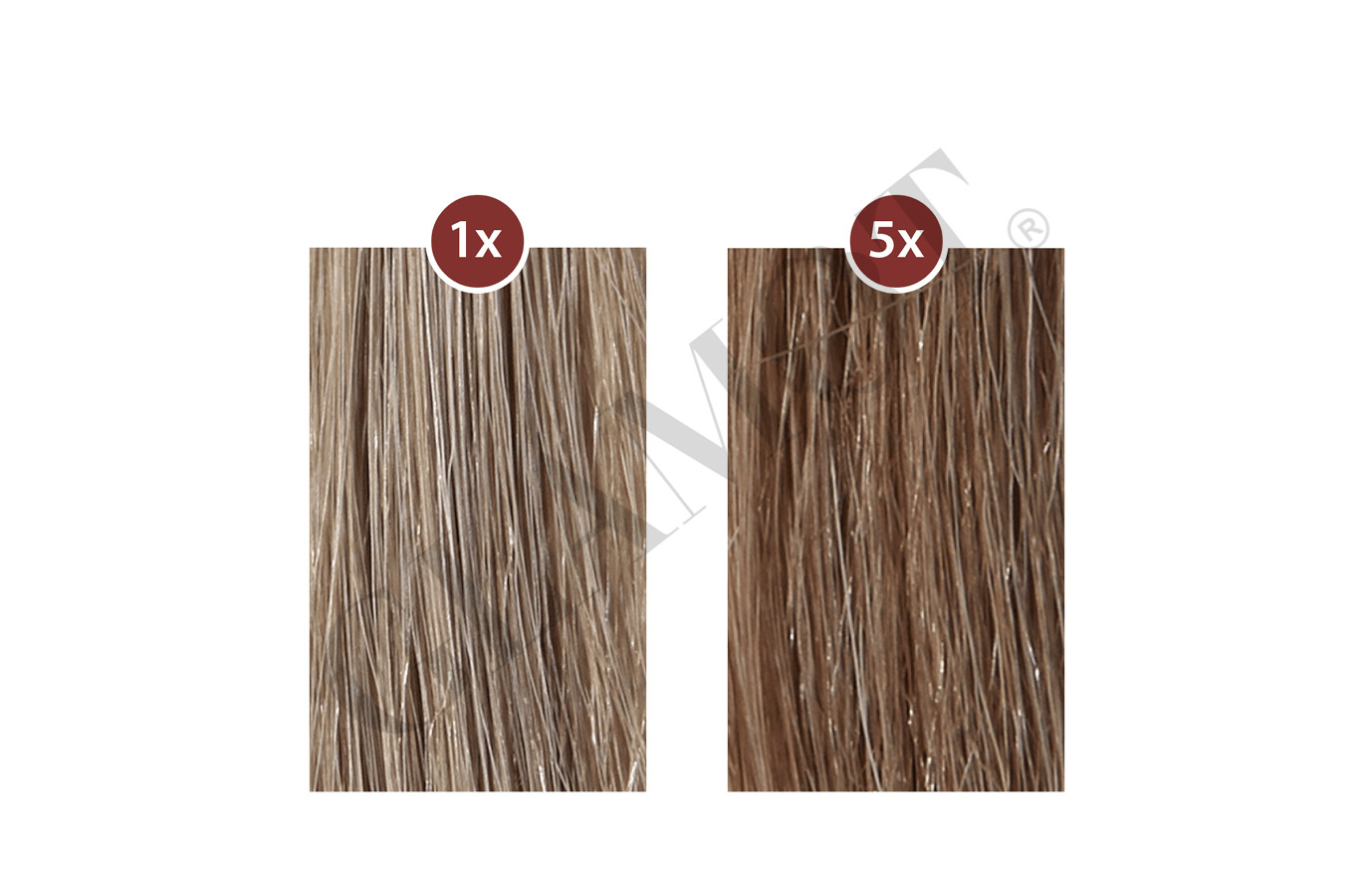 Plantur 39 Colour Brown Phyto Coffein Shampoo Glamot Com